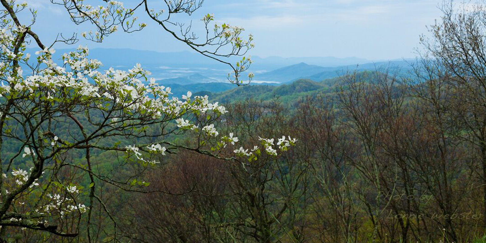 Spring in the Blue Ridge Mountains